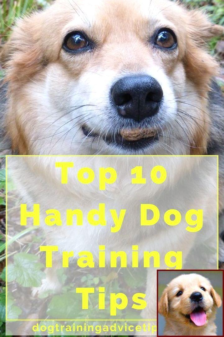 Dog Behavior Problems And Clicker Training Dog Lie Down
