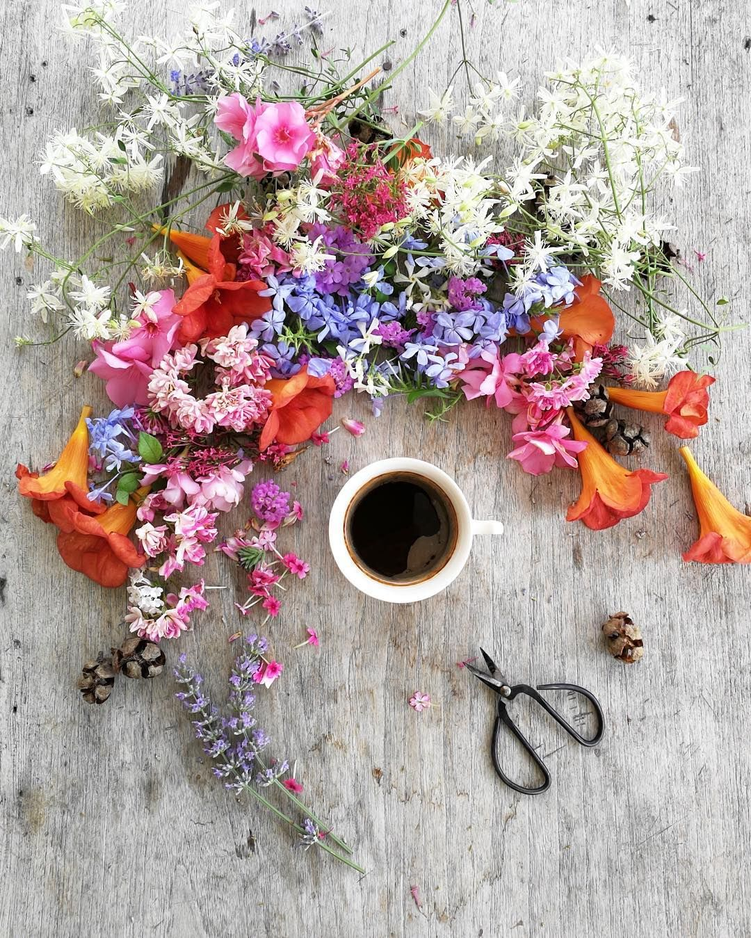 Coffee Time With These Beautiful Summer Flowers Bonjour