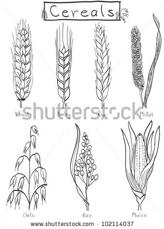 Different Cereal Grains Shutterstock For Homeschool Grains