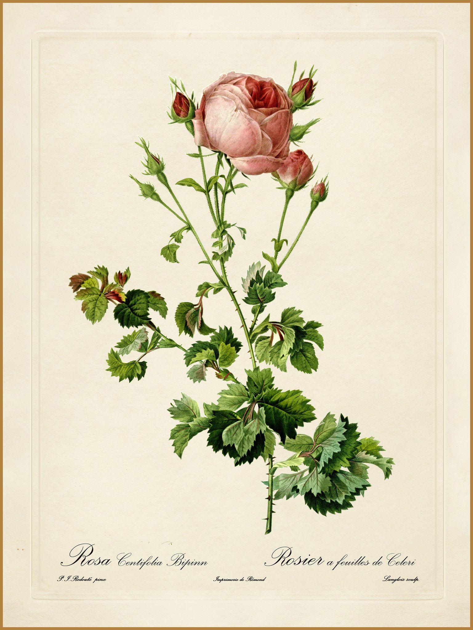 ботанические рисунки растений открытки наряд черного