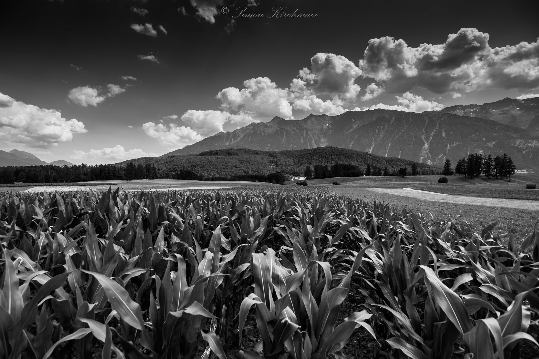 Photograph corn field by Simon Kirchmair on 500px