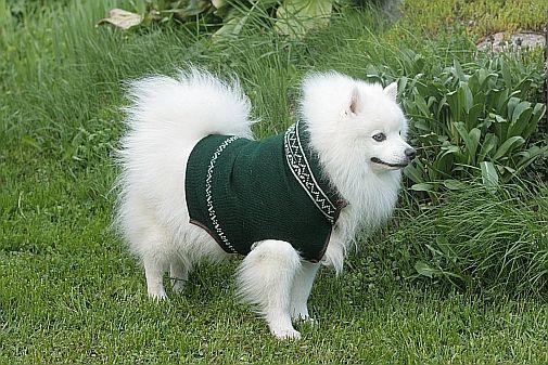 Koiraneule Koira Villa Kirjoneule Tilauksesta Neuleita Neuloa Neulominen Dog Knitwear Wool Two Colored Knitting Fair I Koira Kirjoneuleet Neulominen