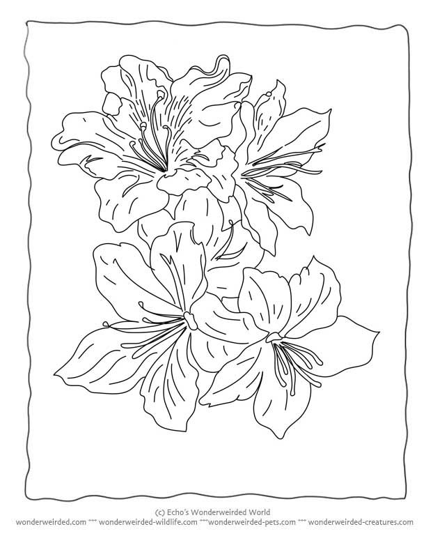 Flower Coloring Sheets Lily @ wonderweirded-wildlife.com, Free ...