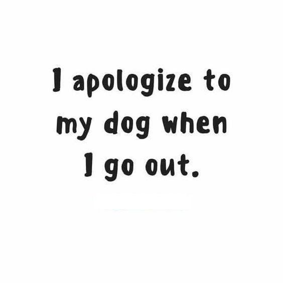 I apologize to my dog when I go out.