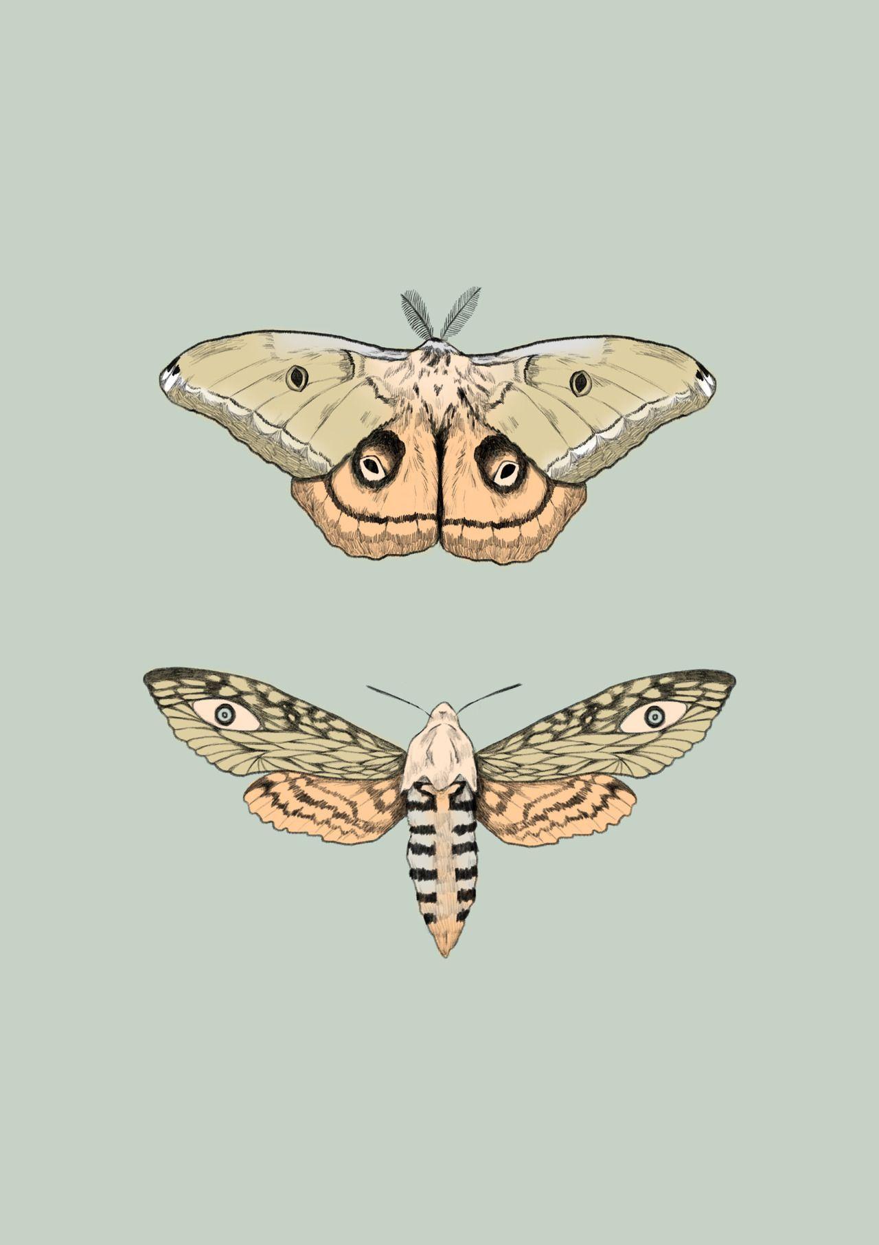 Emmamartschinke Die Manner Und Frauen Von Heute Suchen Nach Flotten Motten Die Ihnen Zeigen Was Lang Geht Hier Sin Moth Drawing Wings Drawing Art Sketches