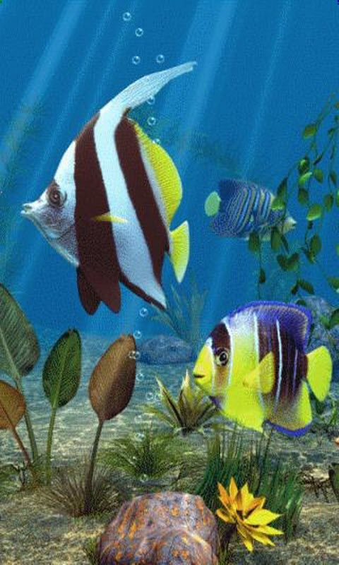 Live Moving Fish Wallpaper Free Download With Images Aquarium