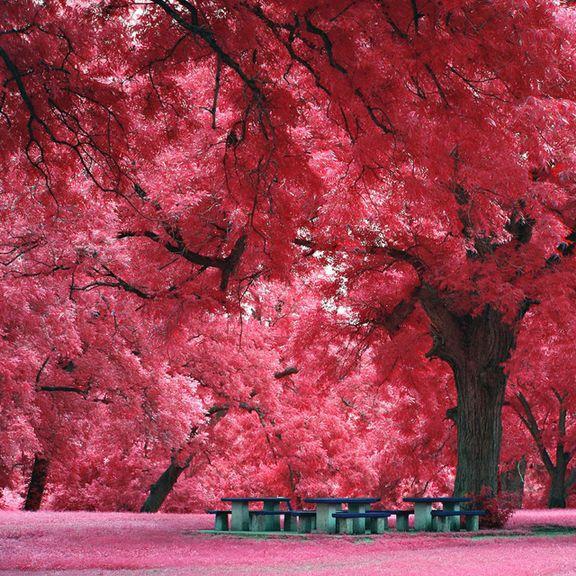 Japanese Maple Tree Austin Tx Amazing Nature Photos Japanese Maple Tree Beautiful Places