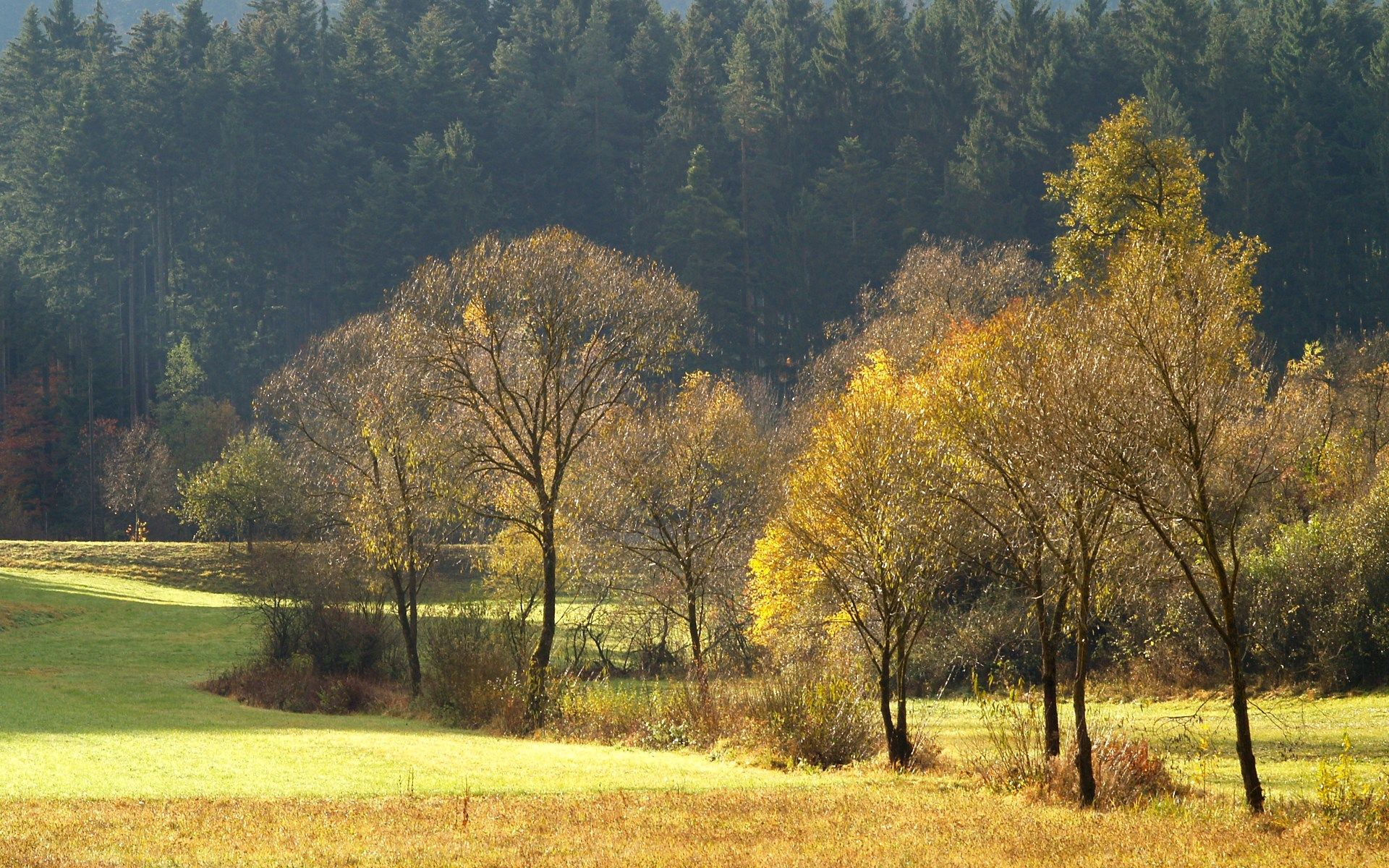 Fall Free Hd Widescreen Fall Scenery Pictures Autumn Forest Field Wallpaper Autumn grass field mountain forest trees