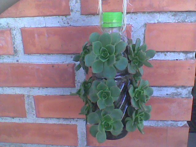 Casa - Decoração - Reciclados: Reciclagem muito Bacana - Plantando e Criando com Garrafas Pet da amiga Jud !