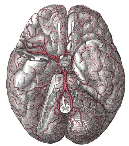 Greys Anatomy Book Brain