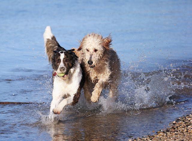 Being An Animal Behaviorist The Duties Salary And More Animal Behaviorist Animals Most Popular Dog Breeds