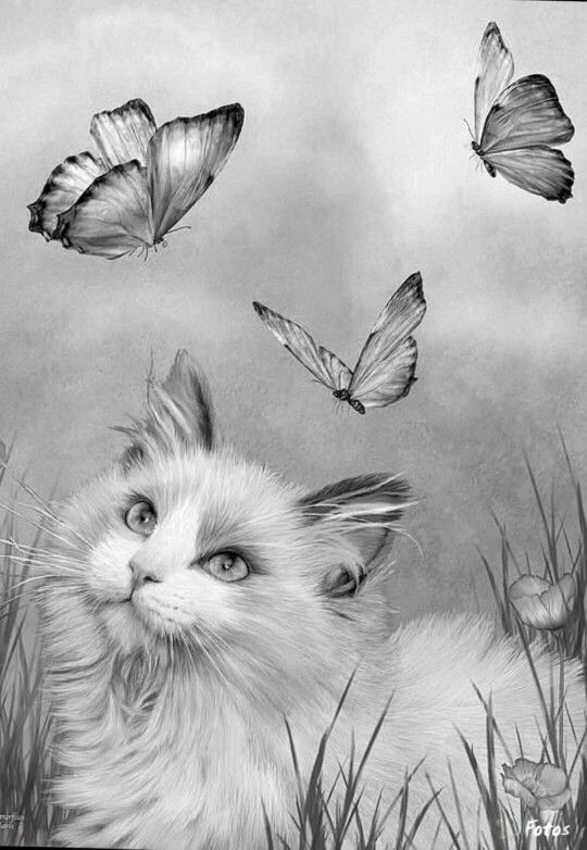 Ragdoll Kitty And Butterflies Cat Coloring Page Adult