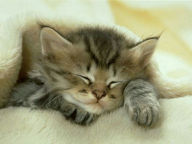 Adorable sleeping kitty