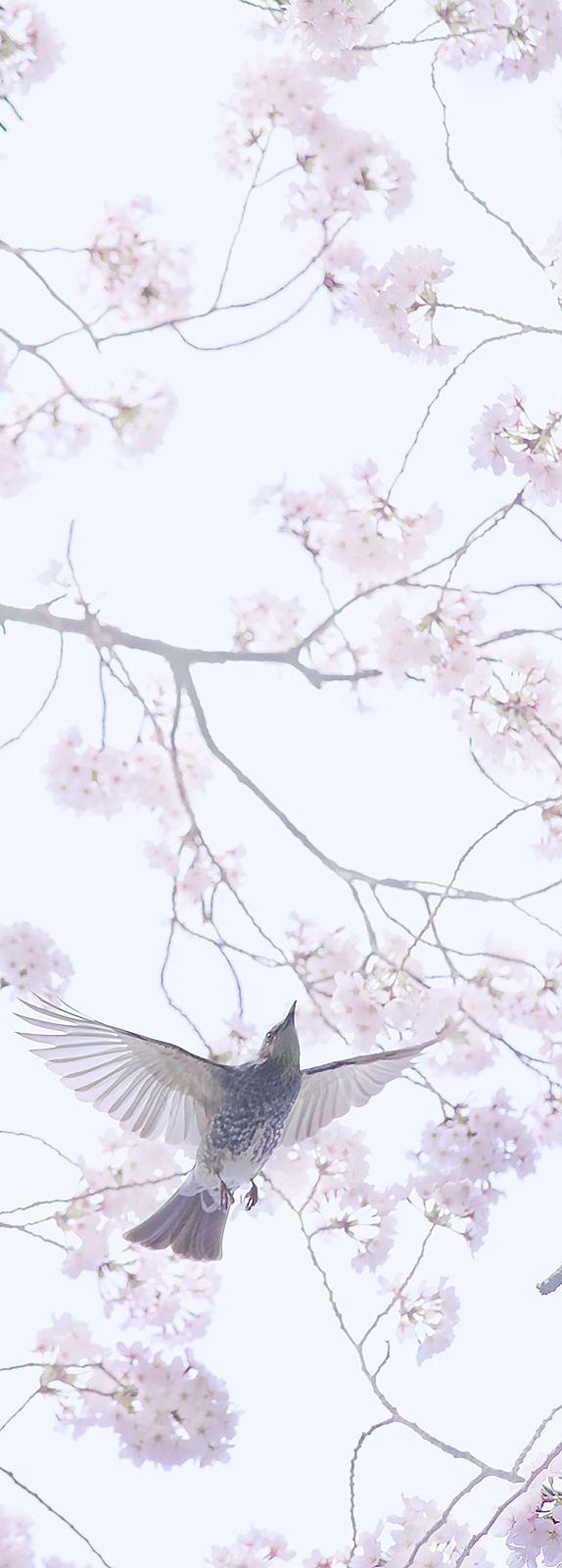 "look bird ""seasonal secrets"" (photography by Yukihiro Yoshida)"