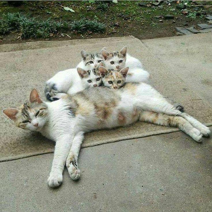 Pin By Sarah Khaled On C U T E Kittens Cutest Cute Animals