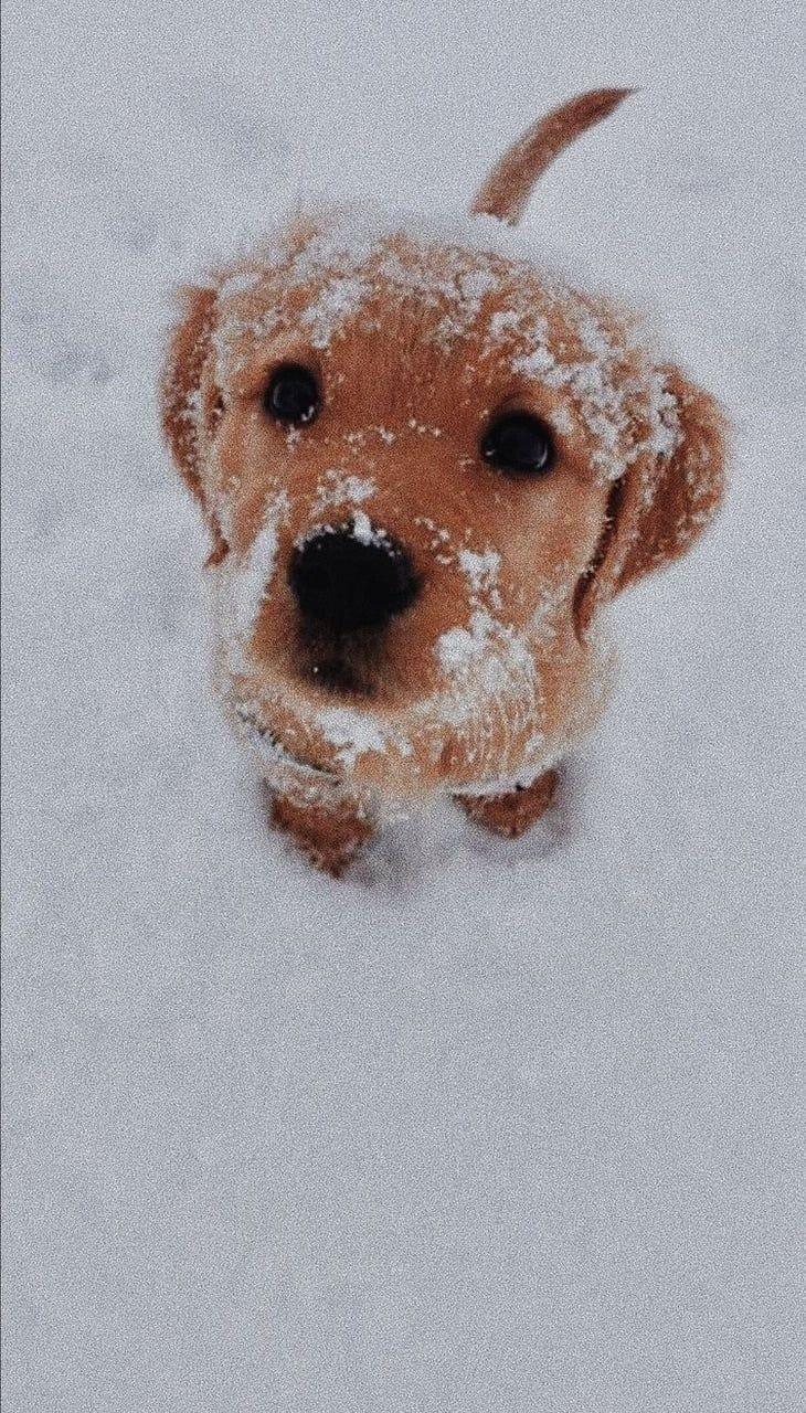 Pin Von Anna Sophie Auf Westi Babyhunde Tiere Hund Tiere