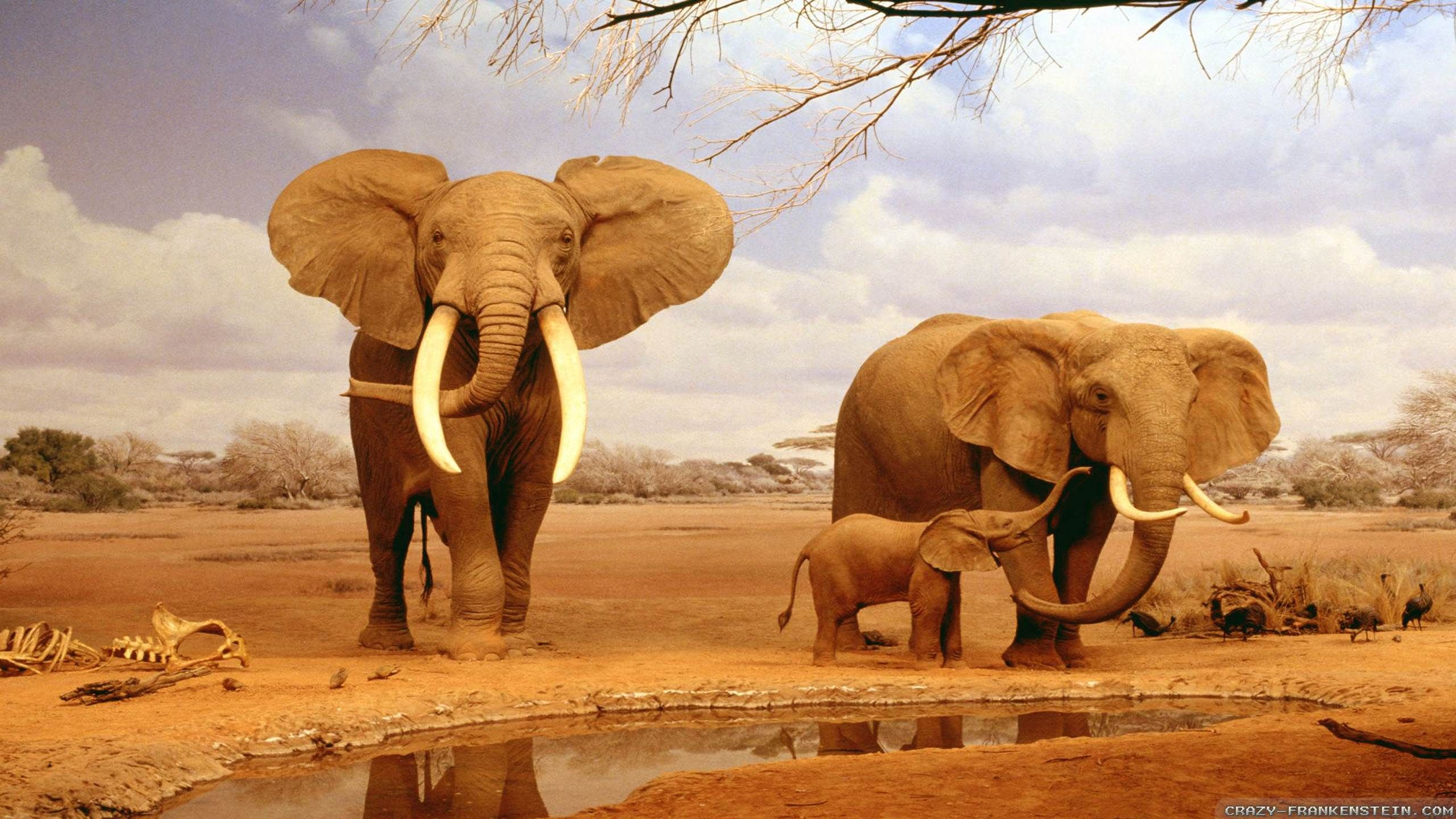 Nice Africa Wallpaper Full Hd Pictures 1600 215 1200 Africa