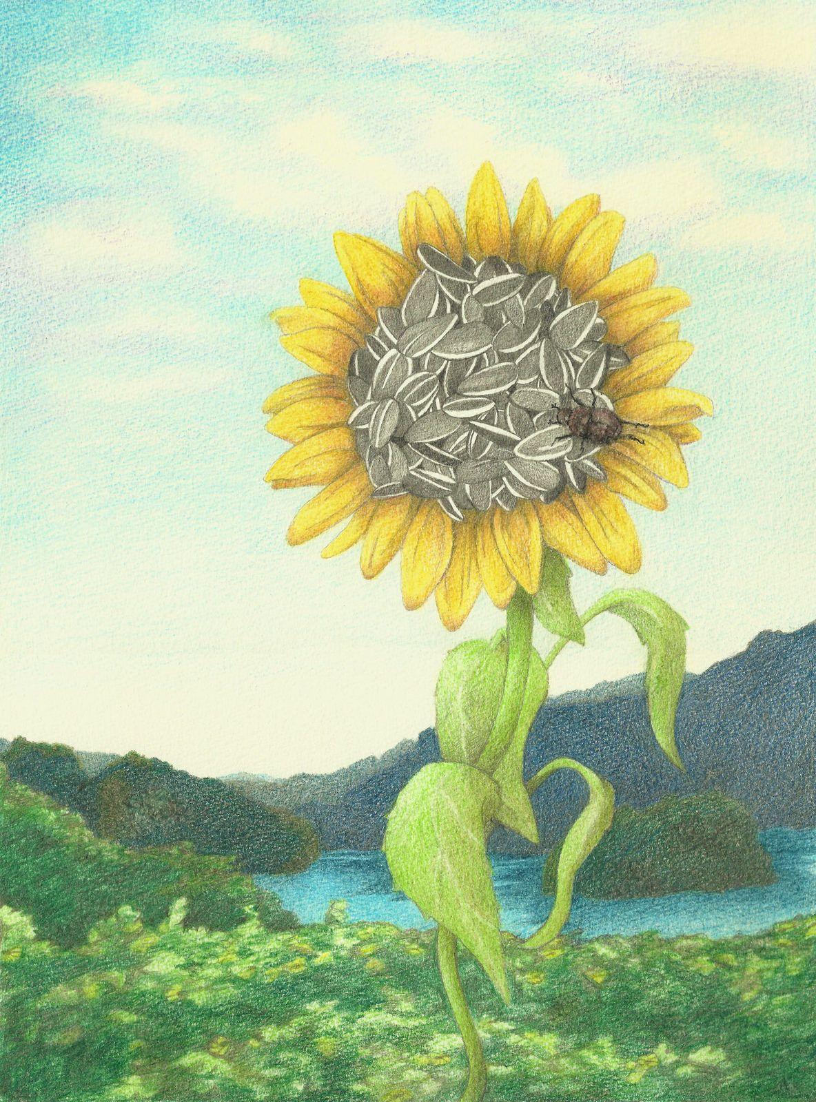 Helianthus annuus the common sunflower artist art