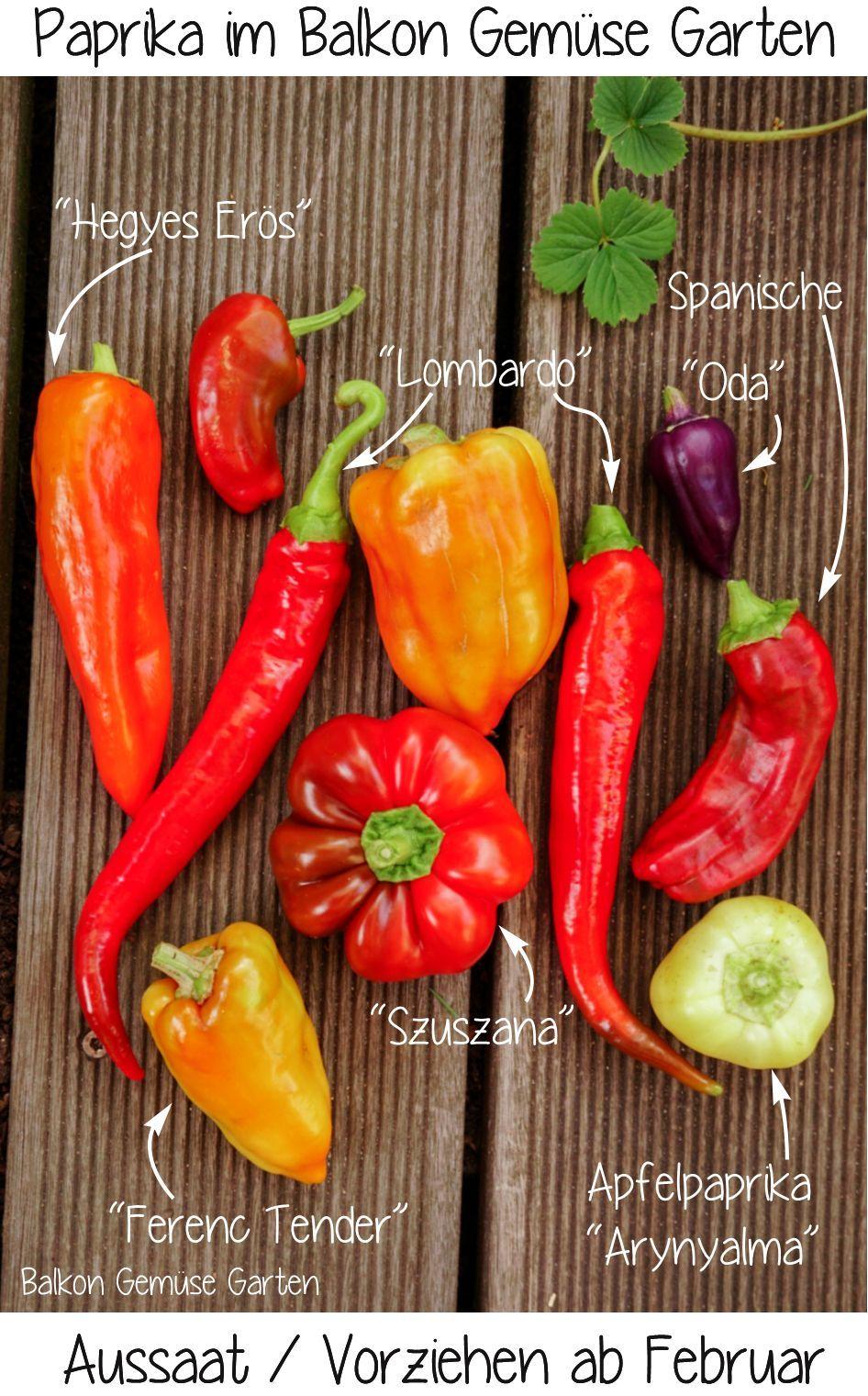 Urban Gardening Paprika Vielfalt Im Balkon Garten Vorziehen Ab Februar Fur Die Ernte Im Sommer In 2020 Gesundes Essen Kochen Gemuse Anbauen Obst Und Gemuse