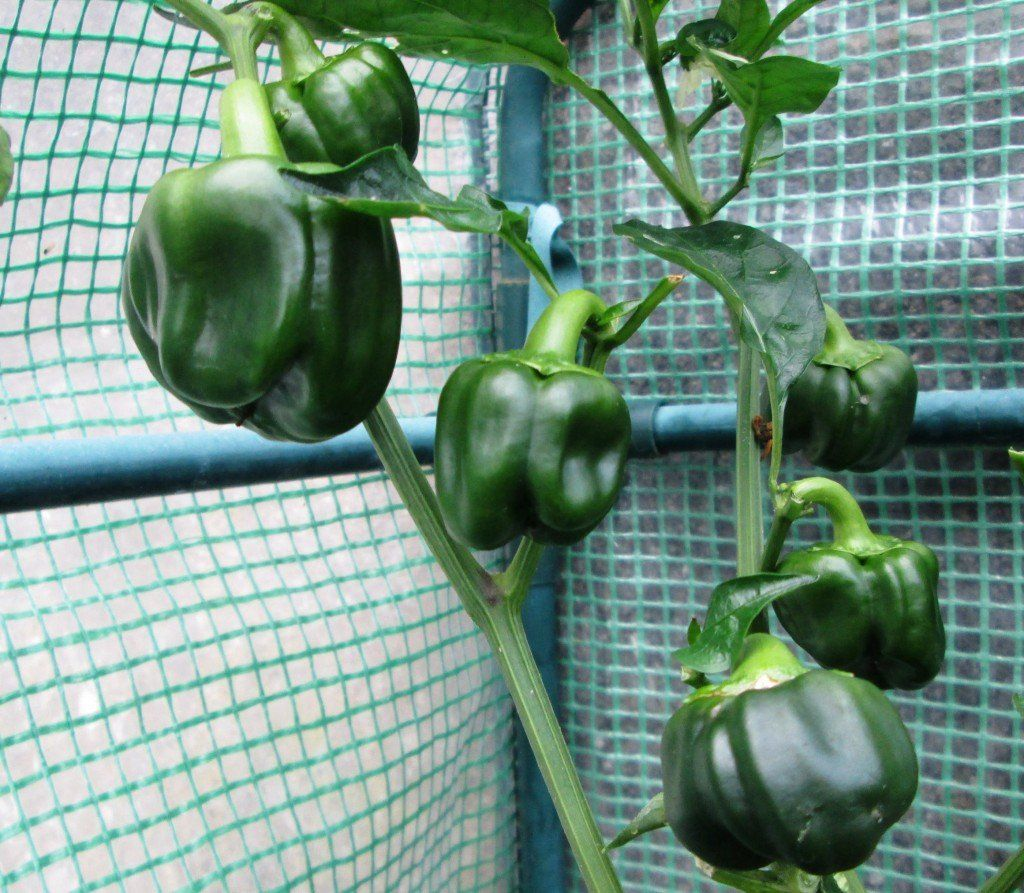 Pin on Gardening: How Does My Garden Grow