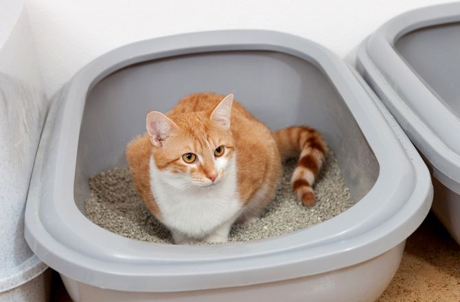 8 Weird Cat Litter Box Habits Pet Care Dogs Pet Care