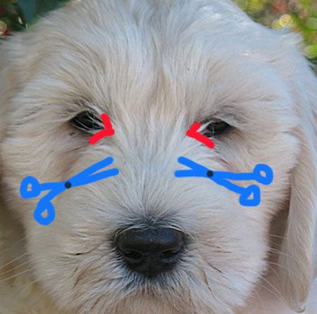 Can Dogs Grow Back Eyes