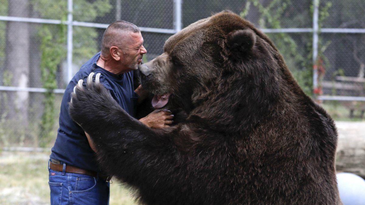Фото самого большого медведя в мире
