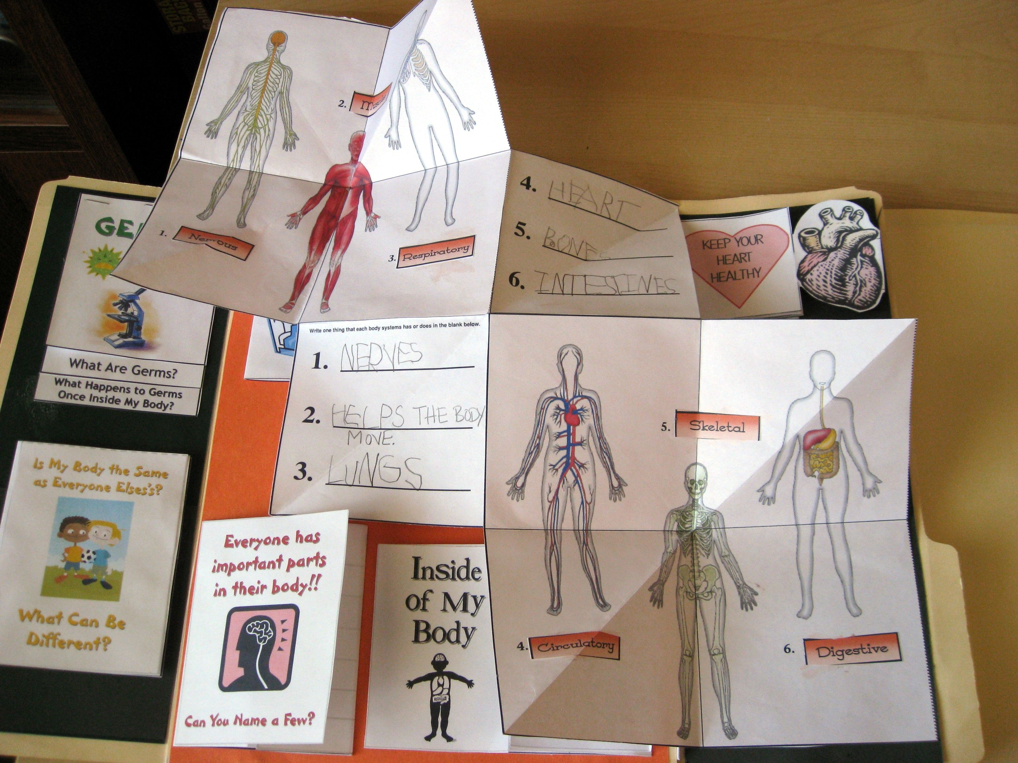 Human Body Lapbook Kindergarten