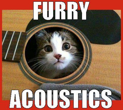 Meow band