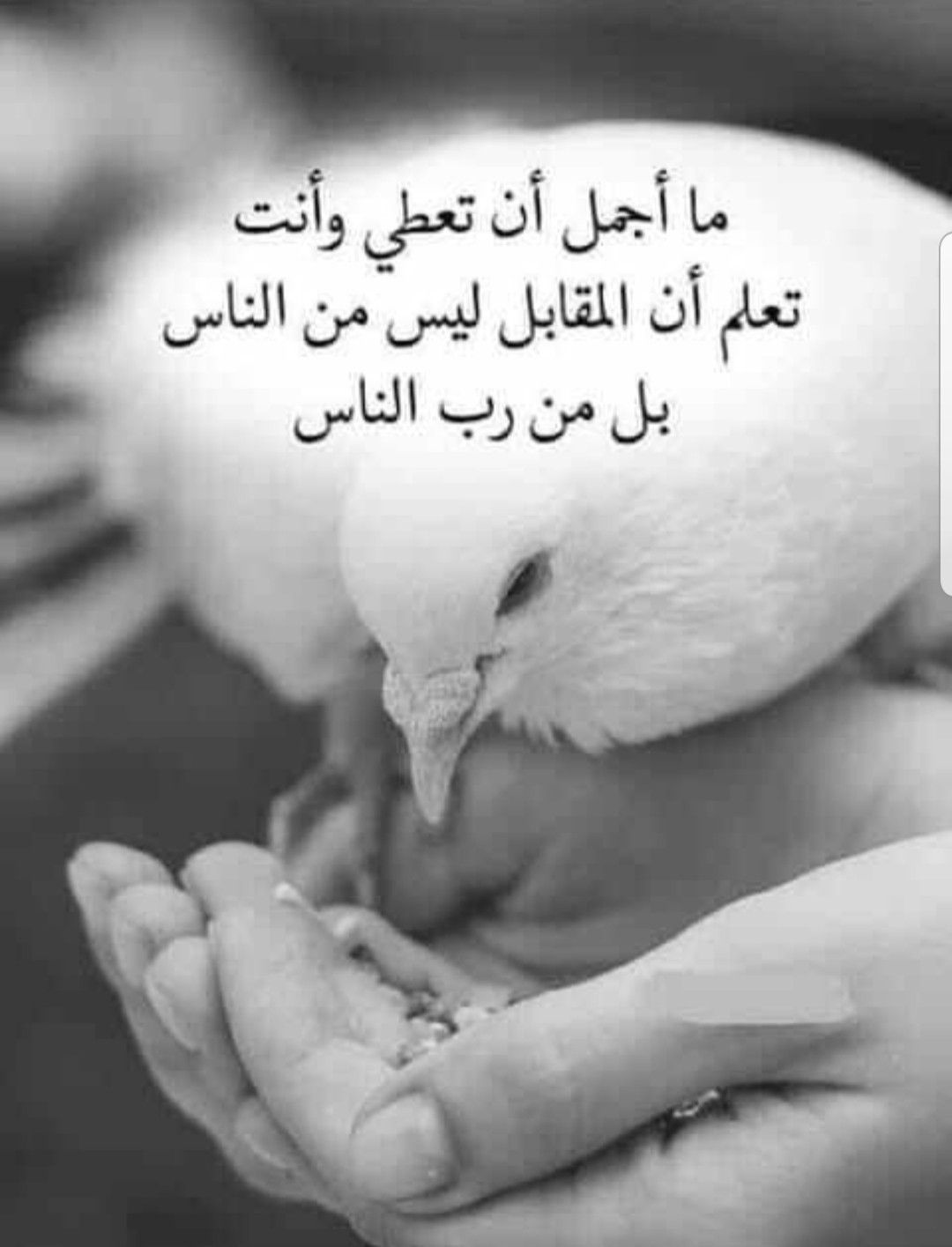 Pin By Lolo On روحانيات Arabic Quotes Quotes Historical Figures