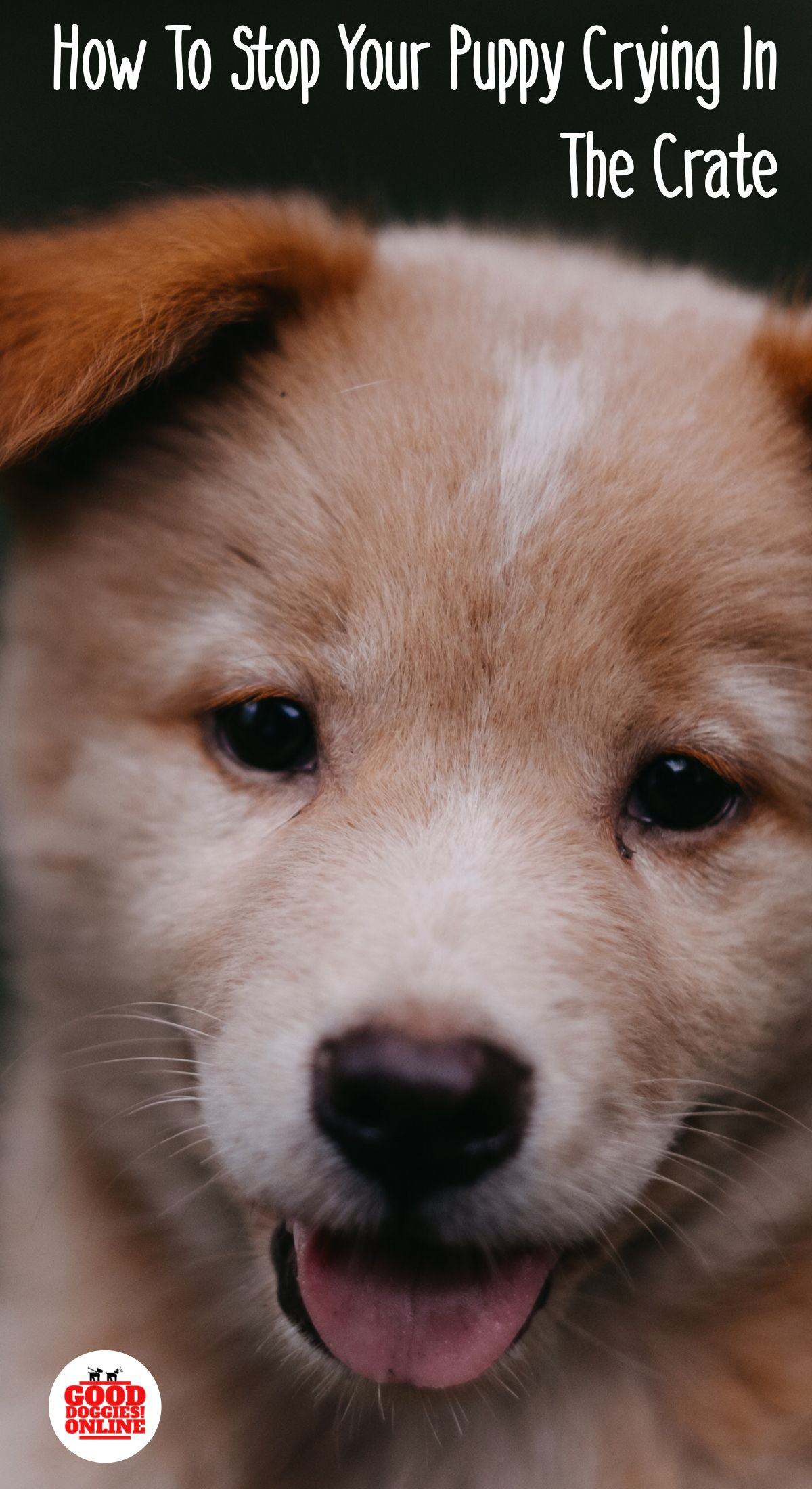 How To Stop Your Puppy From Crying Or Whining In The Crate Check