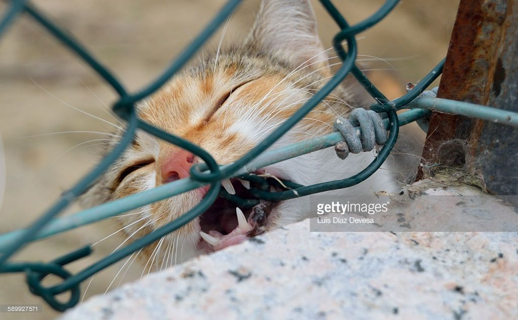 This cat playing begins to bite the chicken wire. | cat | Pinterest ...