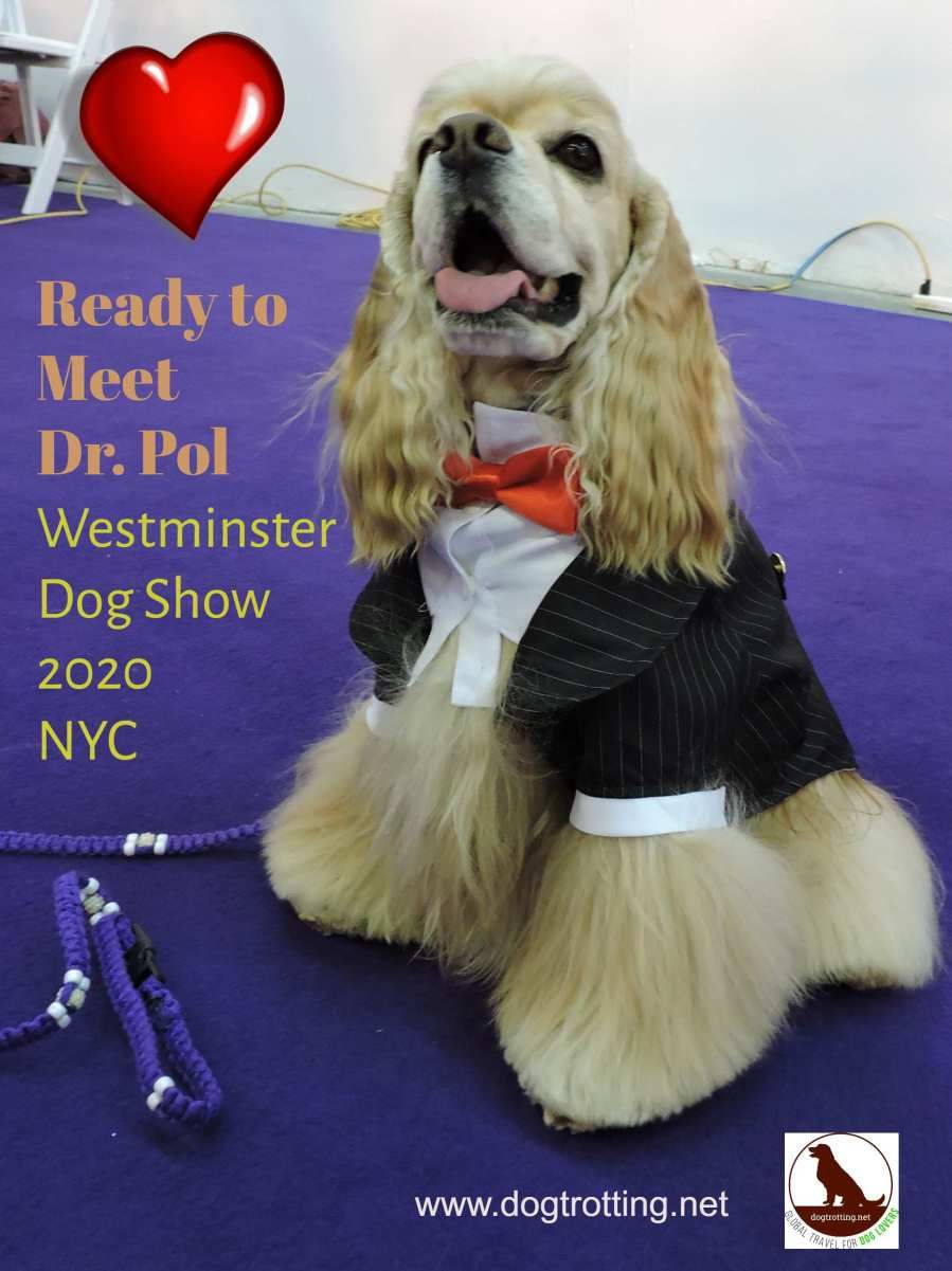 Travel Nyc Meet Dr Pol At Westminster 2020 Westminster Dog