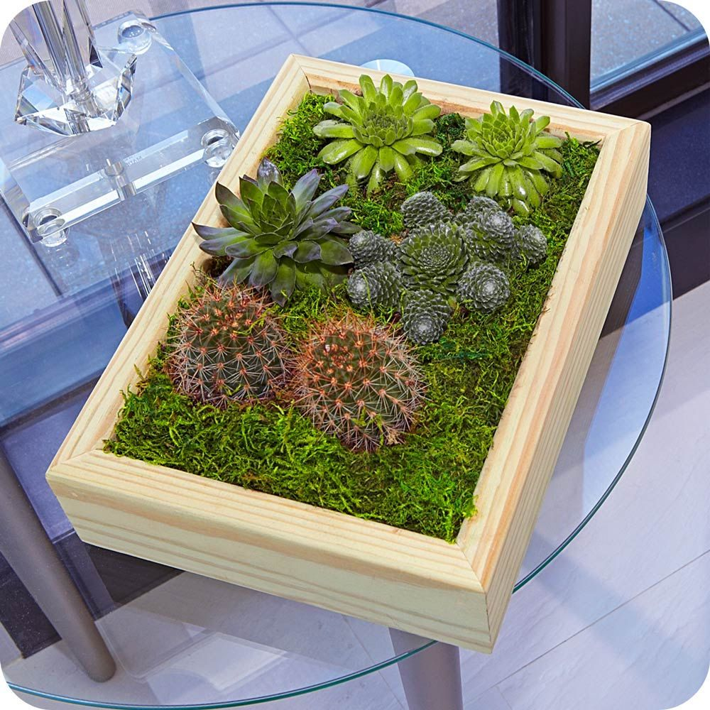 Living frame with succulents craftbnb images about succulents desert life living jeuxipadfo Image collections