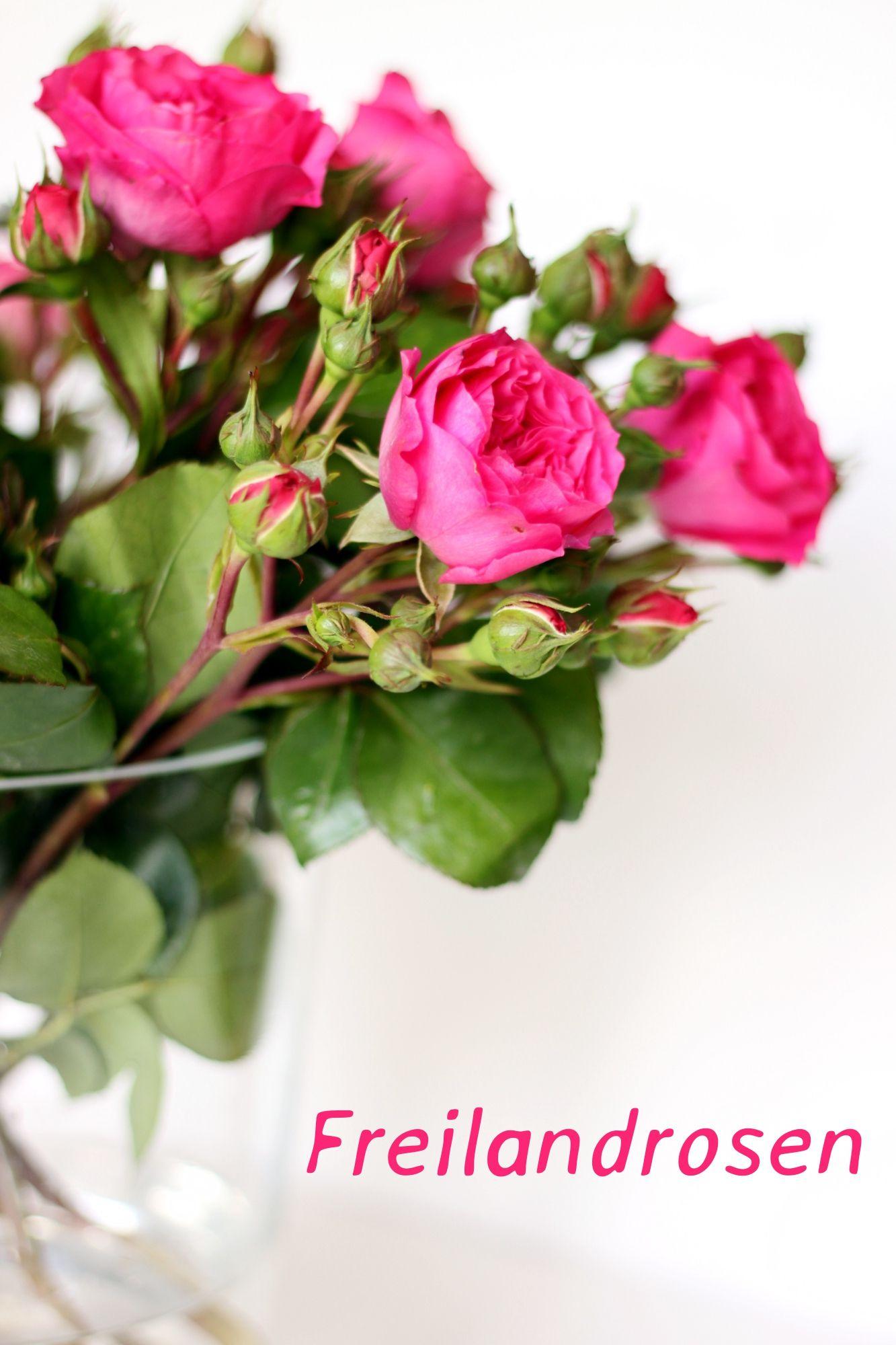 Freilandrosen  ein Genusstraining  Rosen  Rosen Brautstrau blumen und Schnittblumen