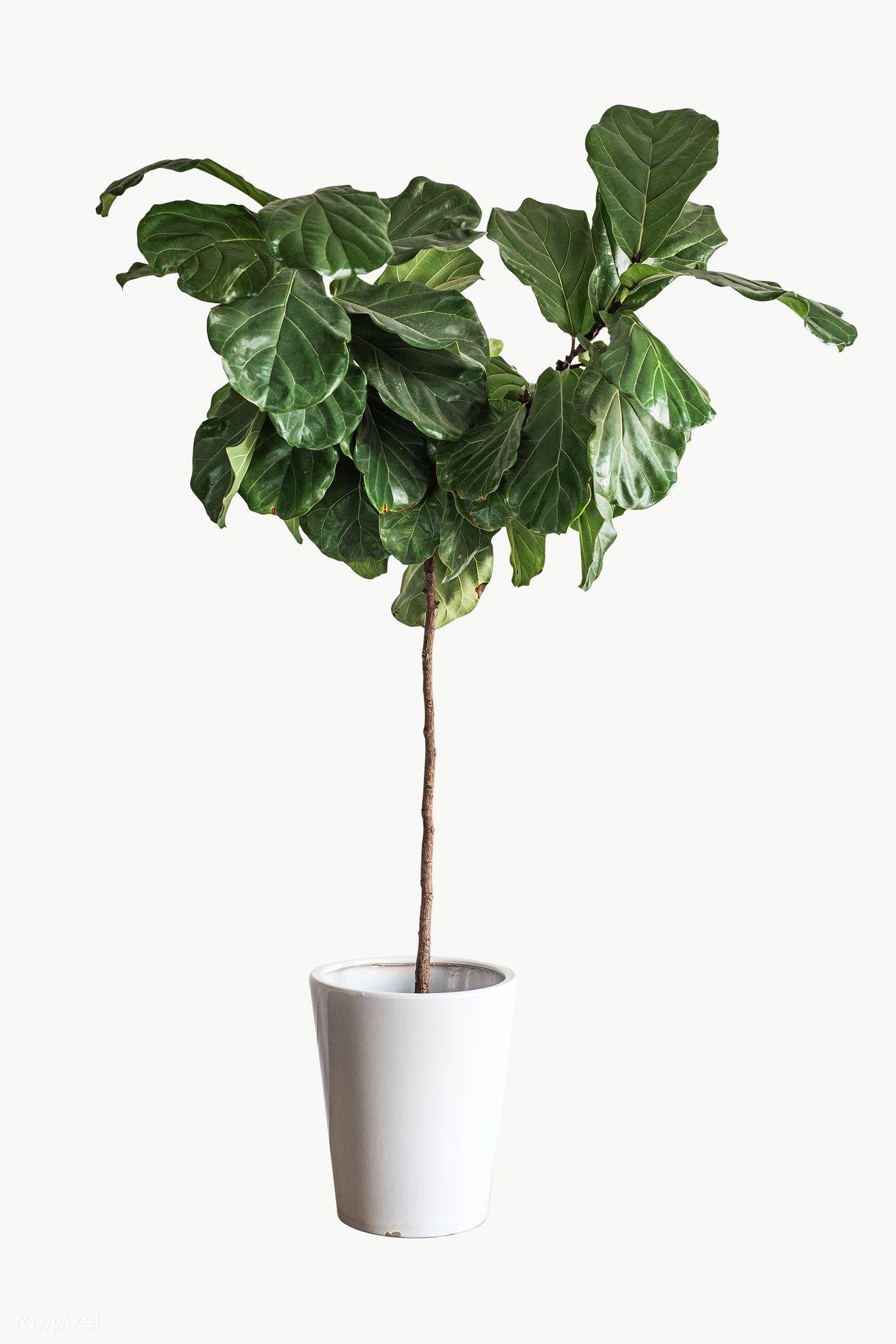 Green Plant For Decoration On White Premium Image By Rawpixel Com Felix Plants Green Plants House Plants Decor