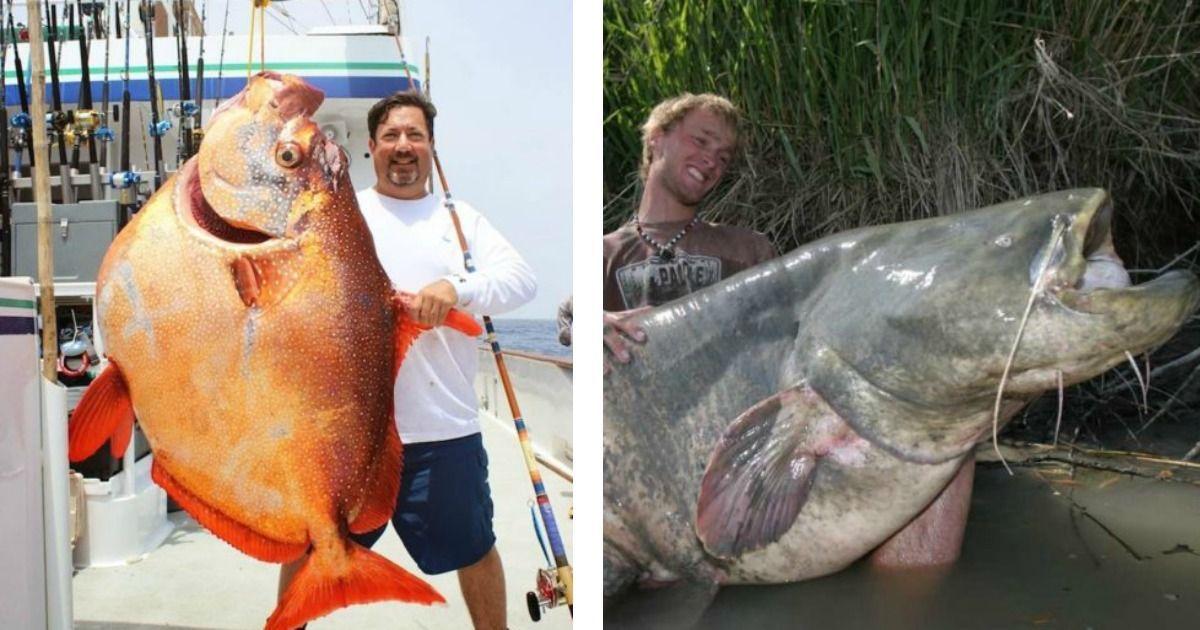 Los 12 peces más extraños que fueron capturados alrededor del mundo