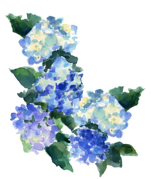 My Favorite Summer Flower Which Is Yours I Got Carried Away Playing With Hydrangeas Yesterday Afternoo Watercolor Hydrangea Watercolor Flowers Watercolor Art