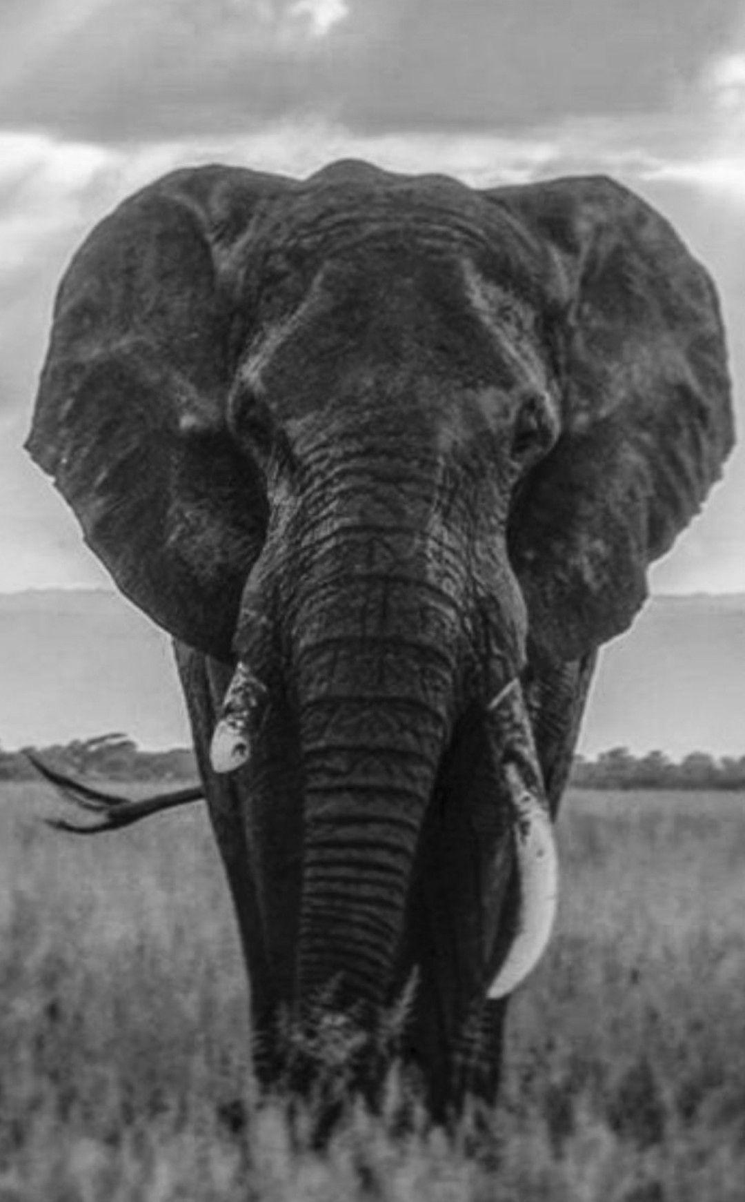 Pin de Maura Fashjian en ELEPHANTS | Pinterest | Elefantes, Reino ...