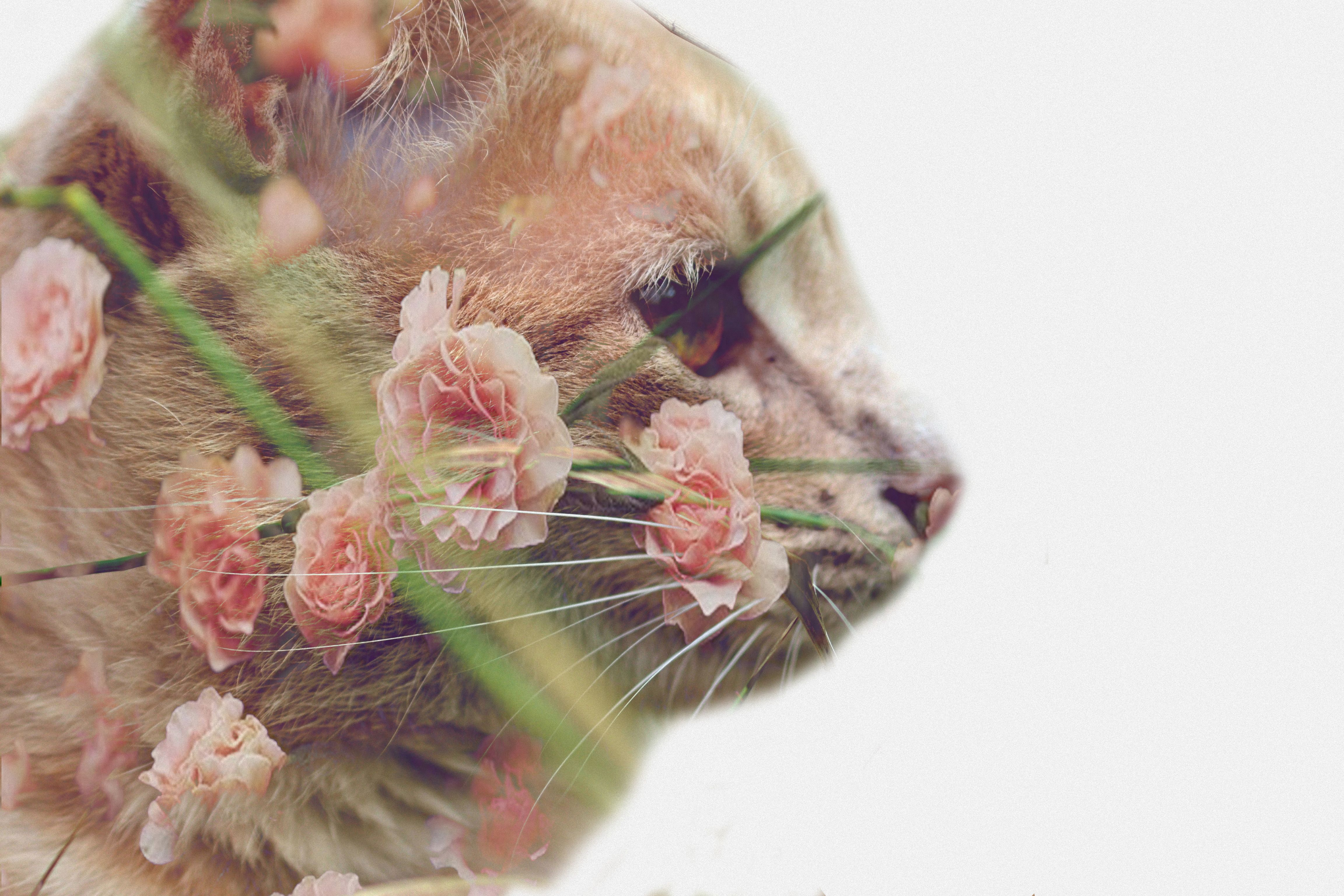 Cat and Vintage Flowers Double Exposure