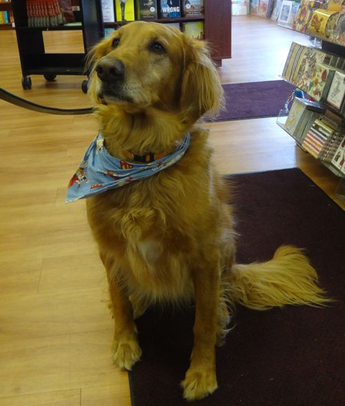 Wellesley Books Newsletter Dog Friendly Stores Old Golden Retriever Golden Retriever