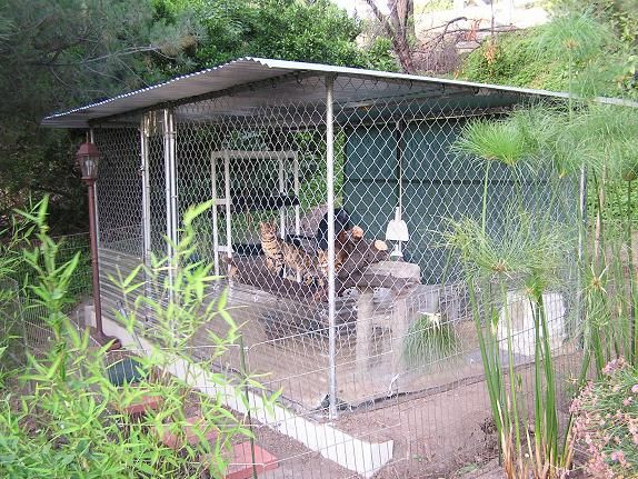 Cat Enclosures for Sale |     and Vancouver, WA ~ Bengal