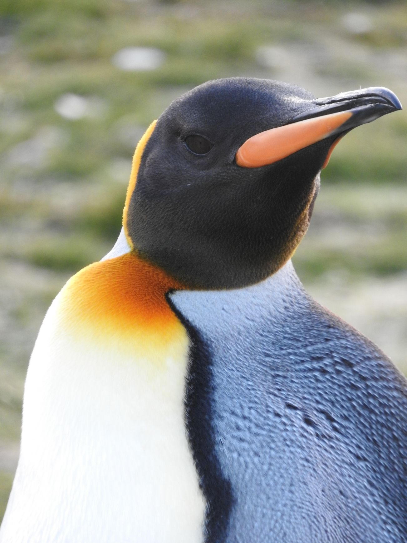 15 Interesting Facts About Emperor Penguins With Images