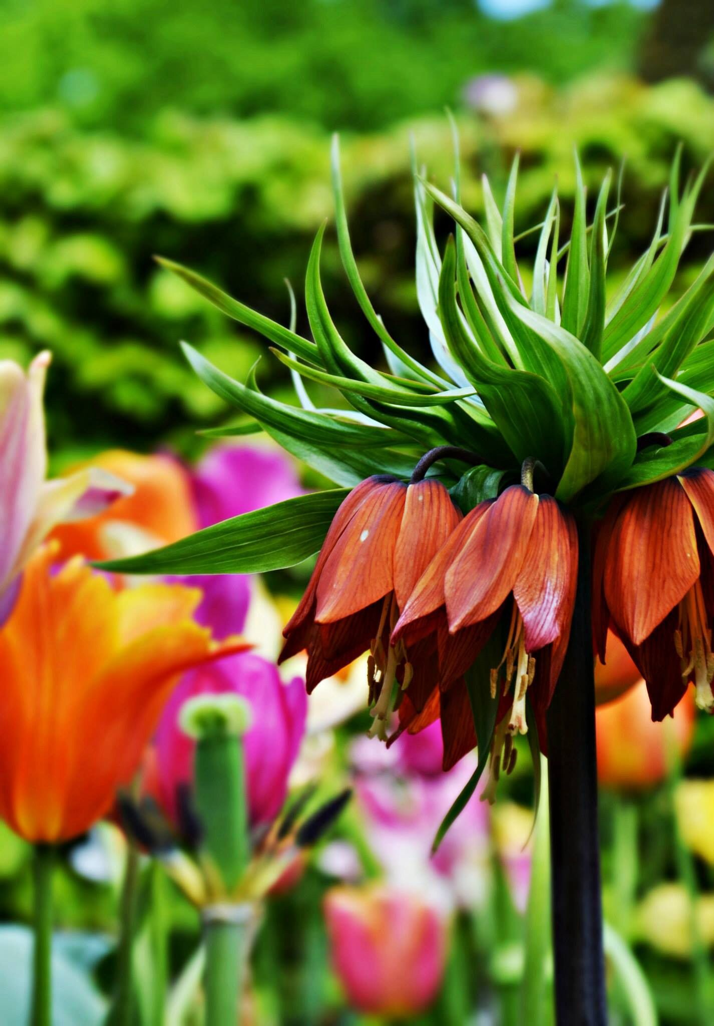 Interessantste blom ooit ...