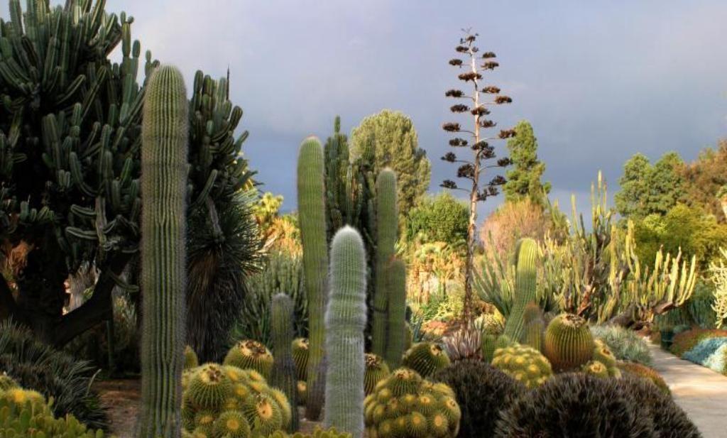 58596a656955e59cc2b3e0d05827e7f0 - Botanical Cactus Gardens Las Vegas Nv