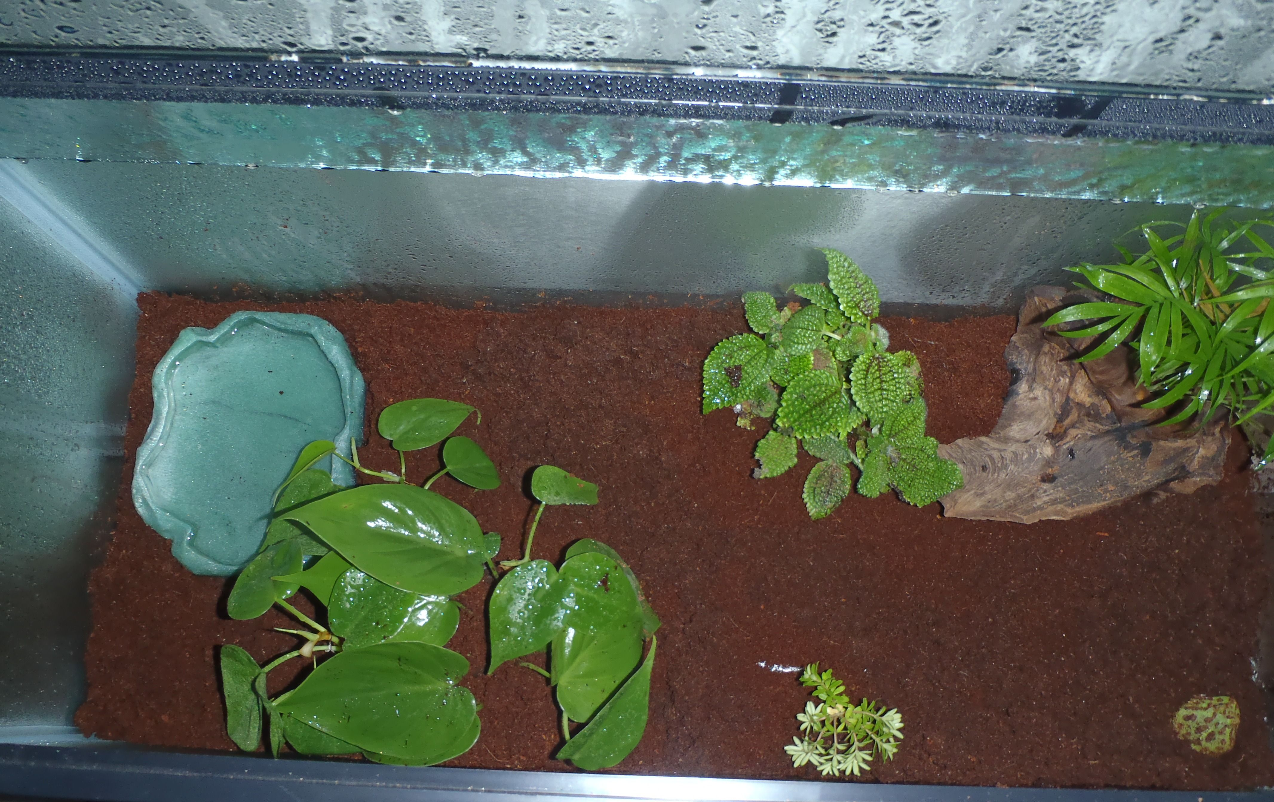 Making A Pacman Frog Habitat Pacman Frog Habitat Setup Reptile