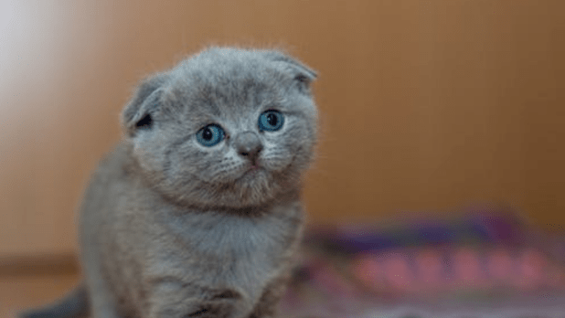Kitten Pictures Hd Kitten Images Cats And Kittens Kitten Pictures
