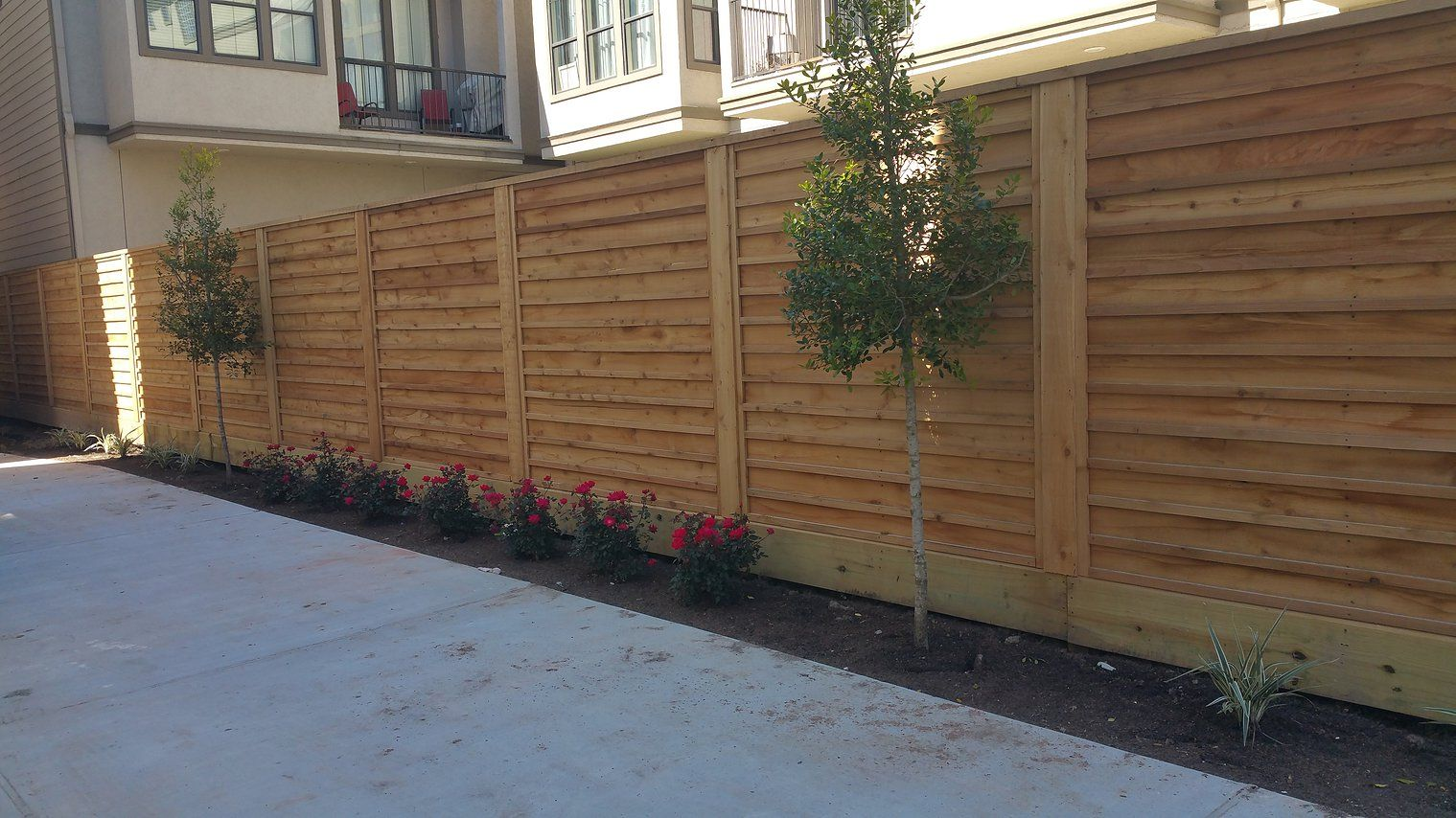Planting Bamboo Privacy Fences
