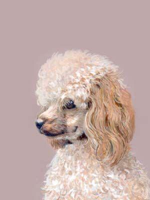 127590be424b Pet Portraits - Poodle Painting - Dog Portraits by Isabel Clark ...