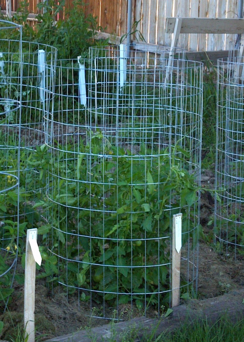 When Do You Plant Vegetables